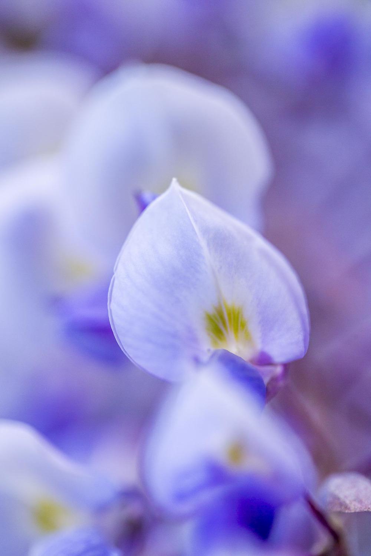 domainedablon_exterieurs_printemps©stephaneleroy-4116.jpg