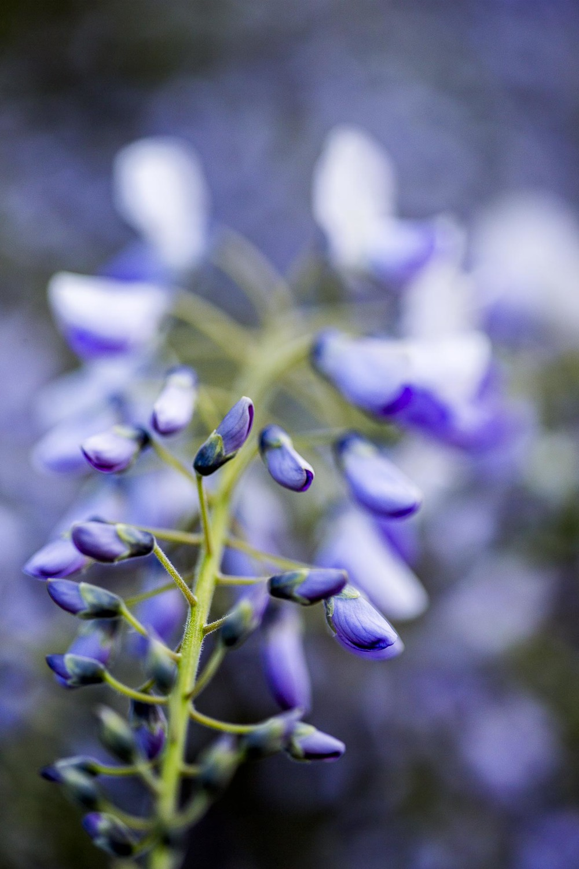 domainedablon_exterieurs_printemps©stephaneleroy-4255.jpg