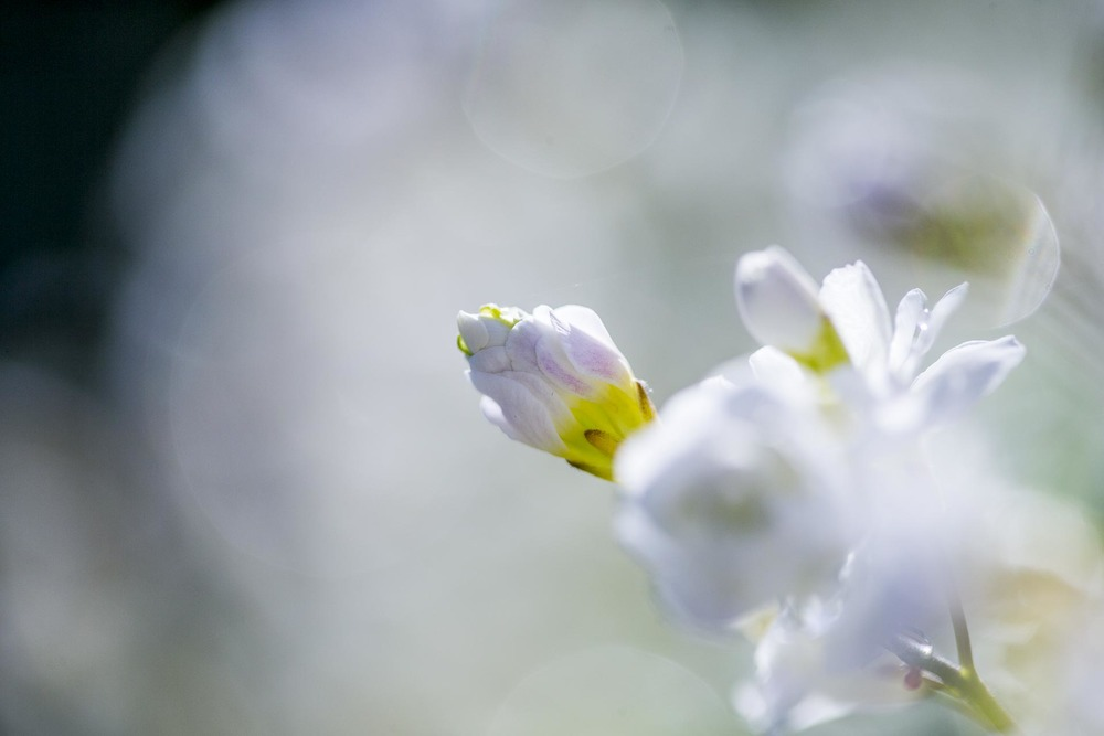 domainedablon_exterieurs_printemps©stephaneleroy-4298.jpg