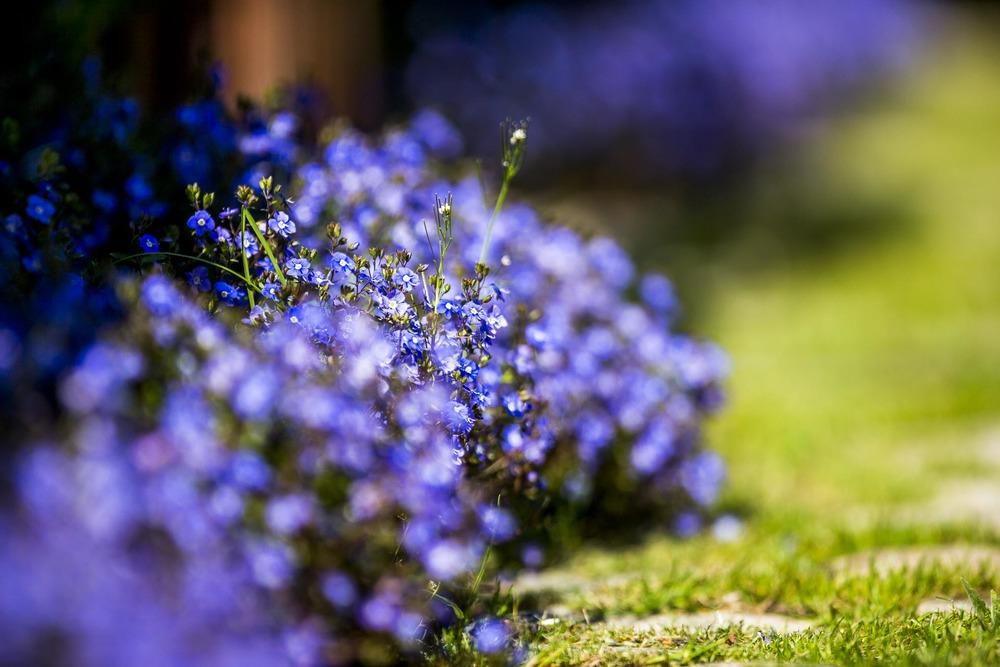 domainedablon_exterieurs_printemps©stephaneleroy-2955.jpg