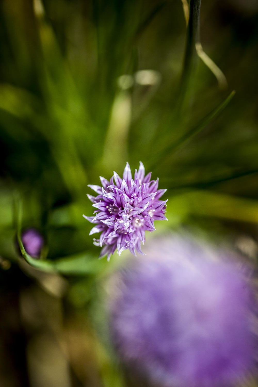 domaine_dablon_potager©stephaneleroy-2-254.jpg