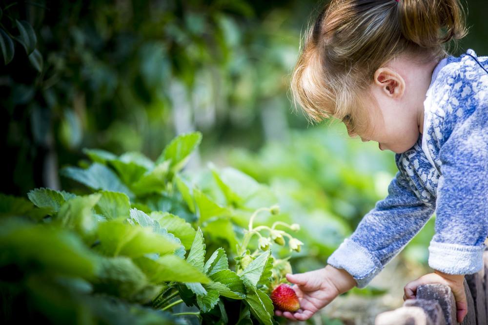 Les enfants ont les fruits et légumes à portée de main
