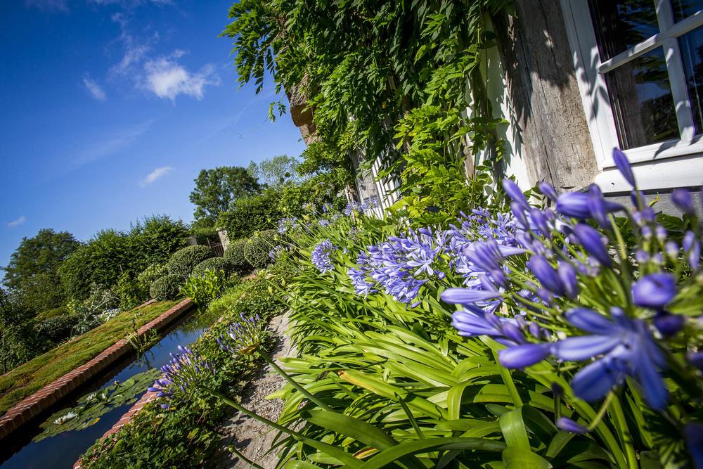 Herbes aromatiques du jardin des simples