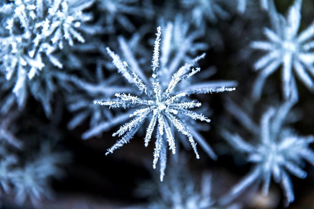 domaine_dablon_exterieurs_hiver©stephaneleroy-_69P3308.jpg