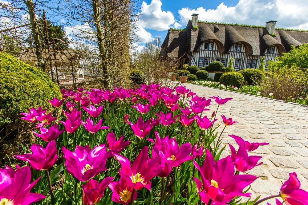 bulbes et tulipes - Domaine d'Ablon