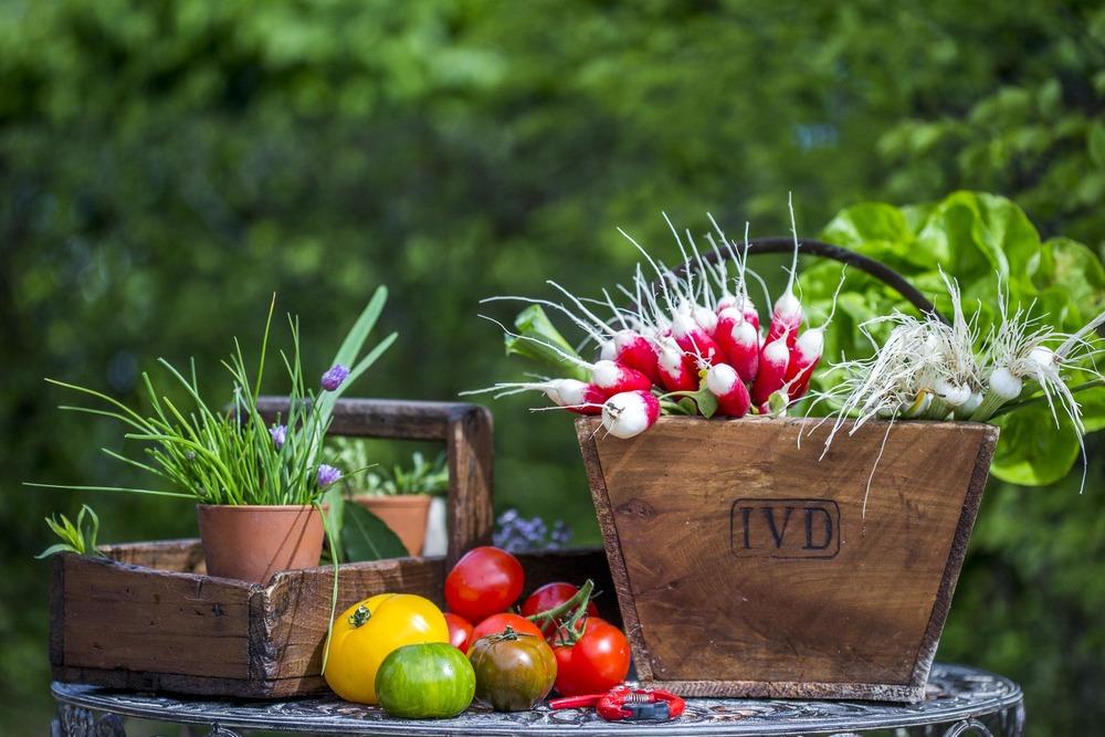 Légumes du potager Domaine d'Ablon