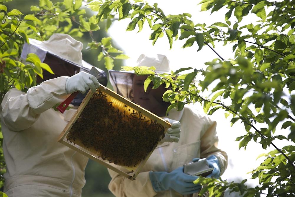 les abeilles du domaine