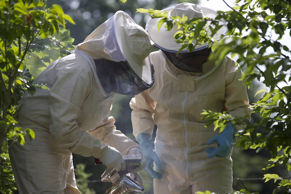 domaine-dablon-activite-ruches-abeilles-F69P0215.jpg