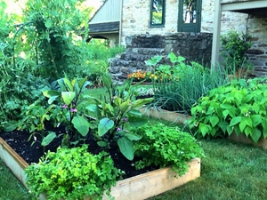 My raised beds in early summer.