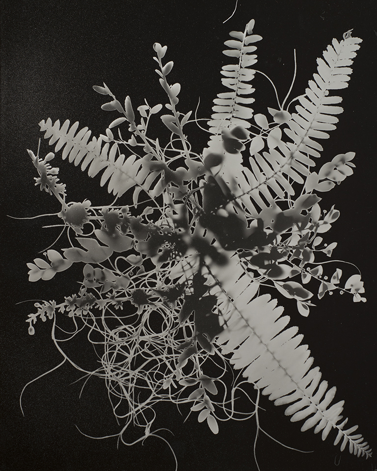 solarized photogram  silver gelatin print  2017