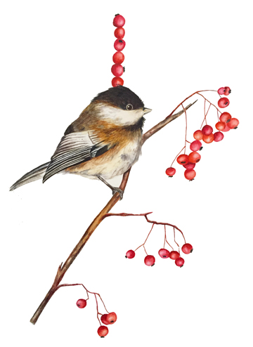 Black-capped Chickadee, Stacked Berries 12x18, Watercolor