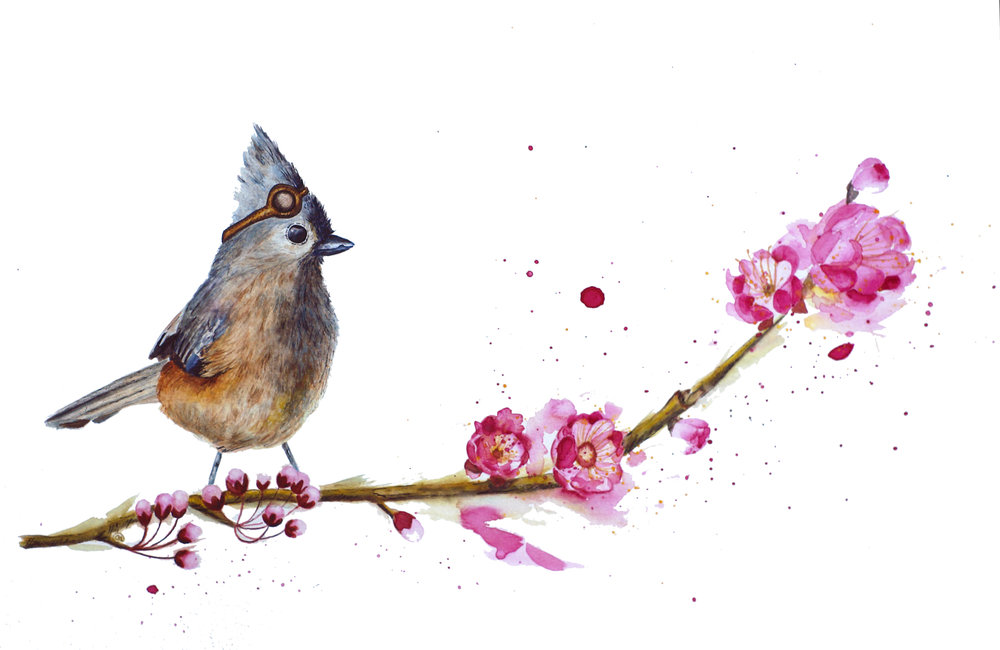 Pilot Bird, Tuffed Titmouse 12x18, Watercolor: $250
