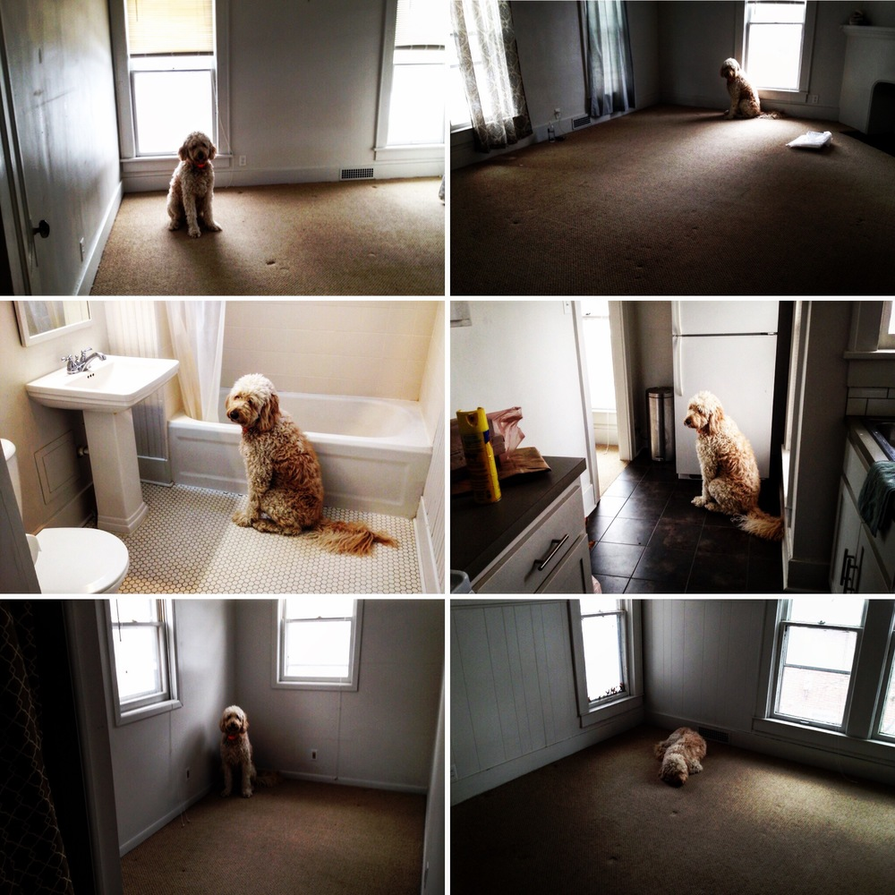 Carson photographed Costello in every empty room in the apartment today. Proof that we left the place clean. And that Costello was very, very sad.