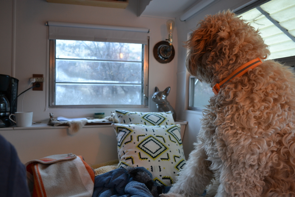 Costello woke bright and early on 12/24 to alert us about a family of deer just outside that window!