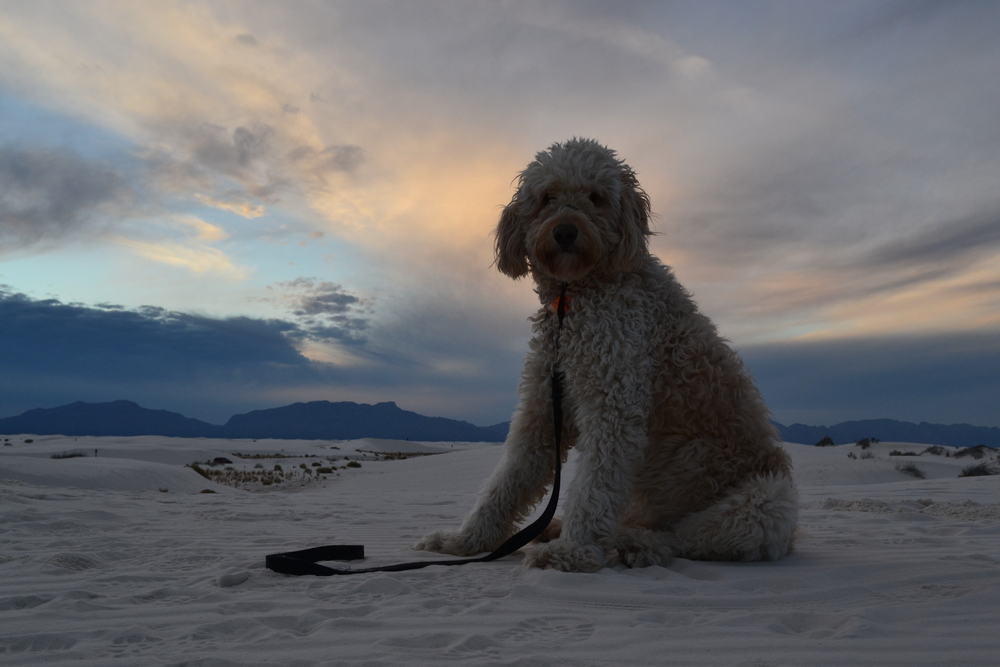 Costello poses for a quick shot at White Sands National Monument.
