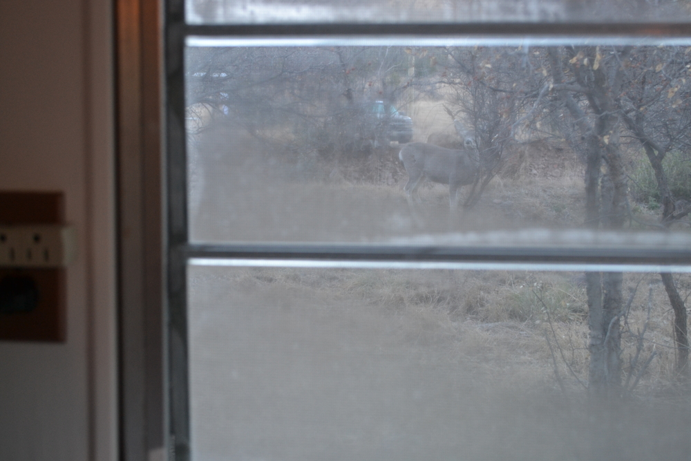 Look closely: A deer foraging outside Elsie's starboard window.
