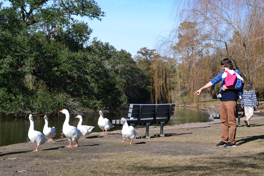 Ashton Kutcher points at ducks.
