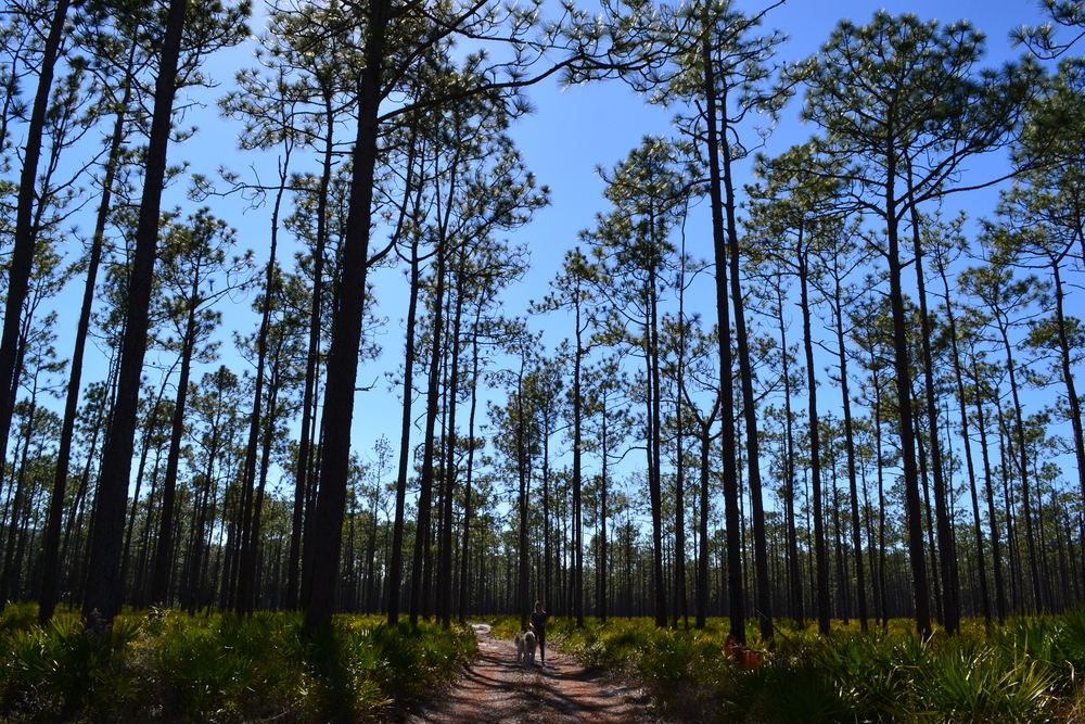 Our first forest shot in Florida! Taken along the road to Panama City just outside of Pensacola.
