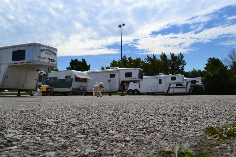 Costello (and Elsie!) squeezed in at the Wisconsin State Fair campground. On our last day a bunch of horse trailers moved in a for a competition at the grounds. Costello fit right in!