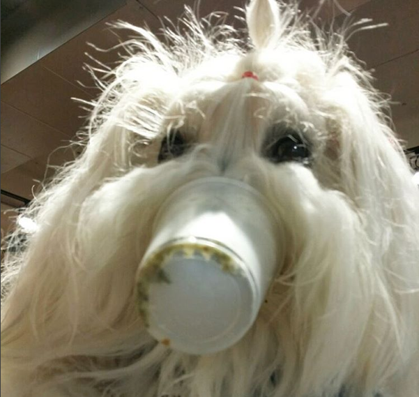 rufus_the_coton.png