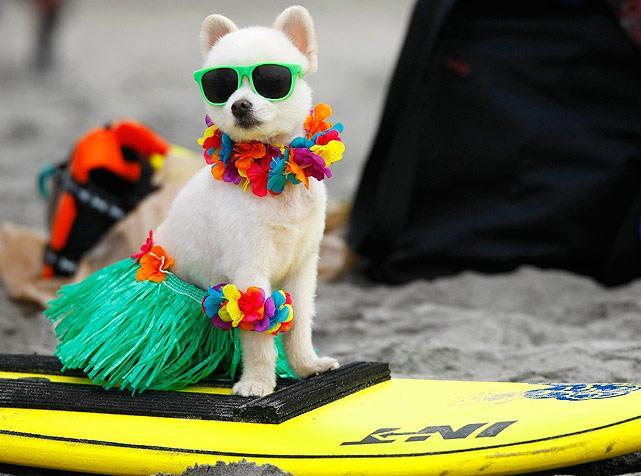 Aloha-dog.jpg