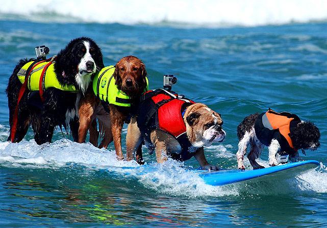 5-dogs-surfing.jpg