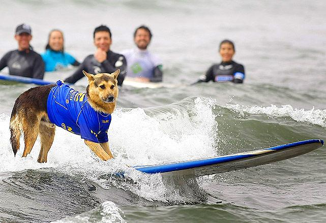 dog-surfing-people.jpg