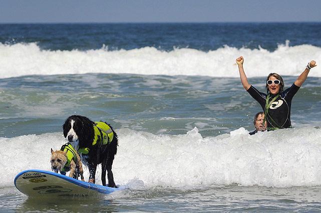 Dogs-surfing.jpg
