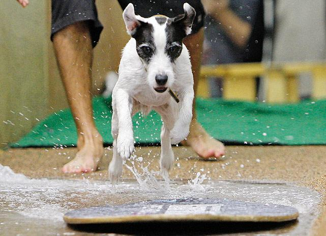 dog-skimboarding.jpg