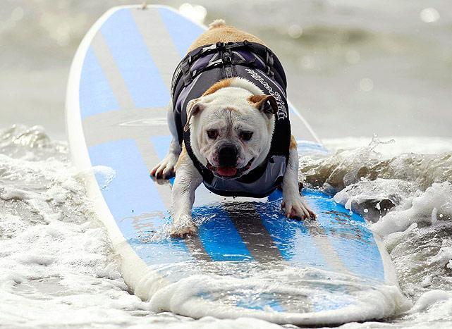 Surf-dog-1.jpg