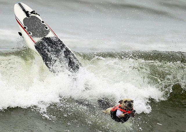 Surf-dog-2.jpg