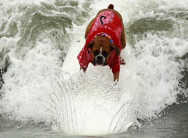 Surf-dog-5.jpg