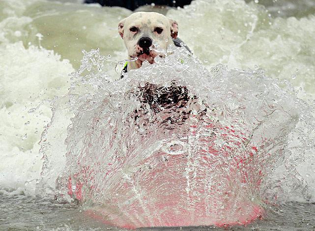 Surf-dog-3.jpg