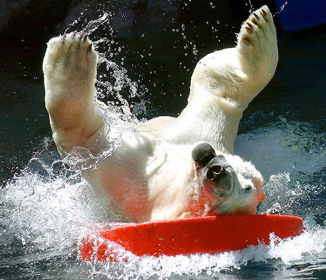 Polar-bear-surfing.jpg