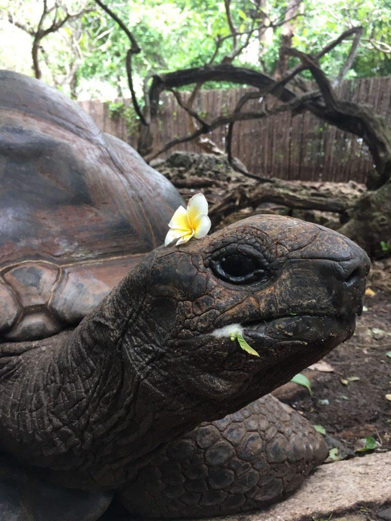 Turtle-1-1-768x1024.jpg