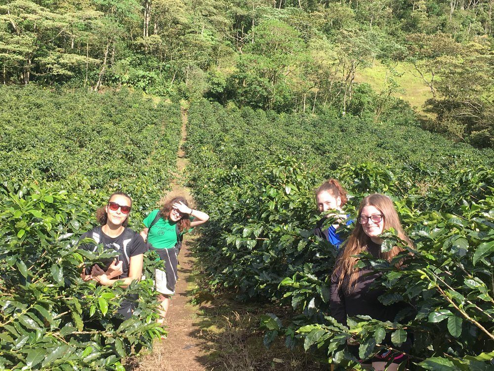 Coffee farm tour, led by Henry.
