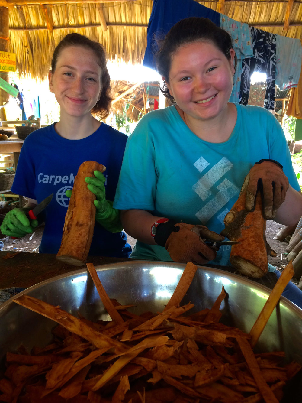First time: harvesting and processing cinnamon from a cinnamon tree. Natali and Kiara worked diligently to carefully remove strips of the inner bark of the tree.
