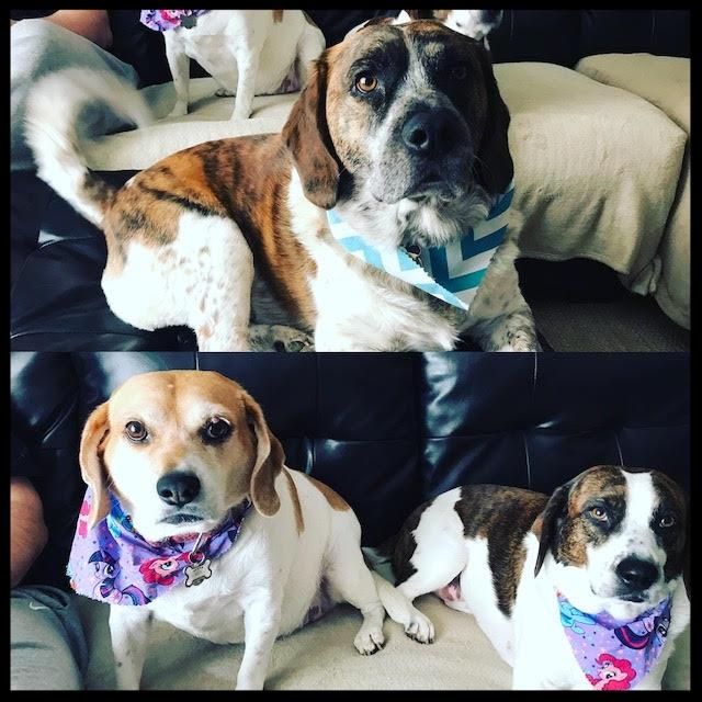 Corey dogs.jpg