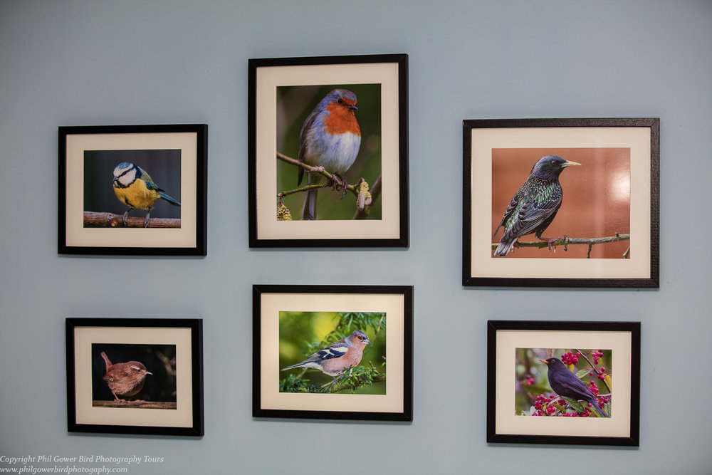 The Garden Bird Collection