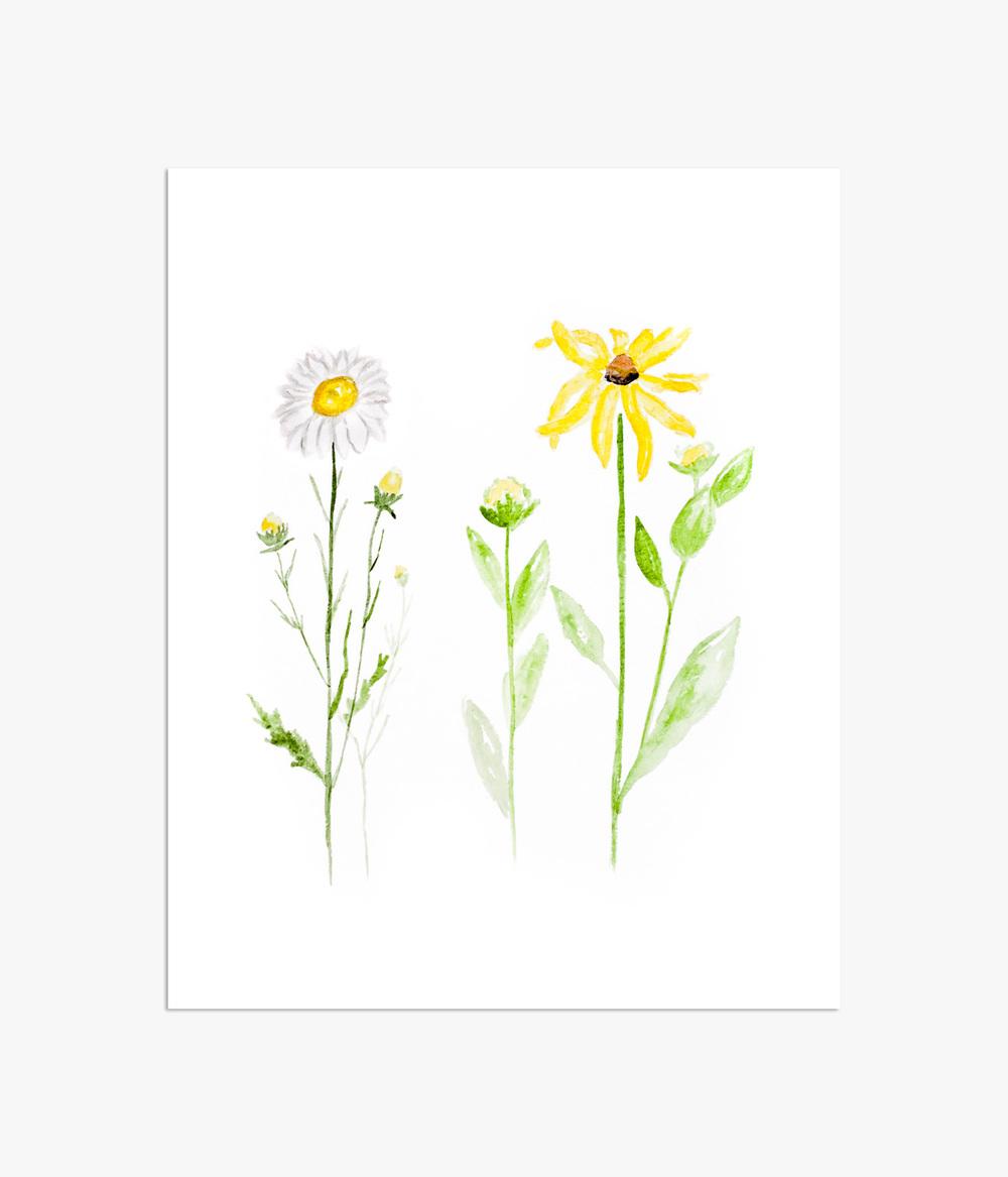 daisy botanical.jpg