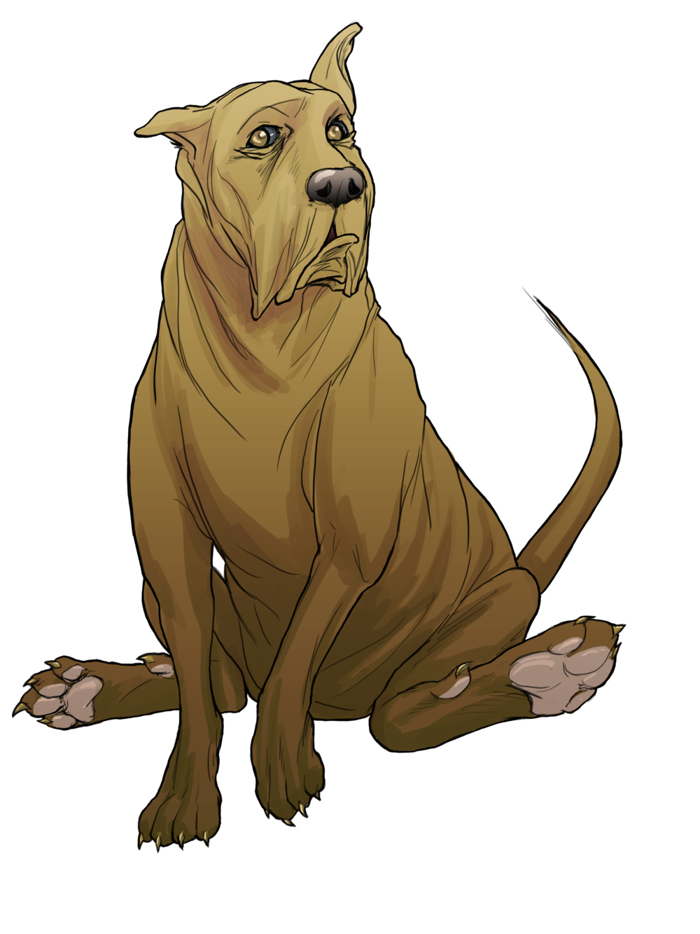 boarhound brown color.png