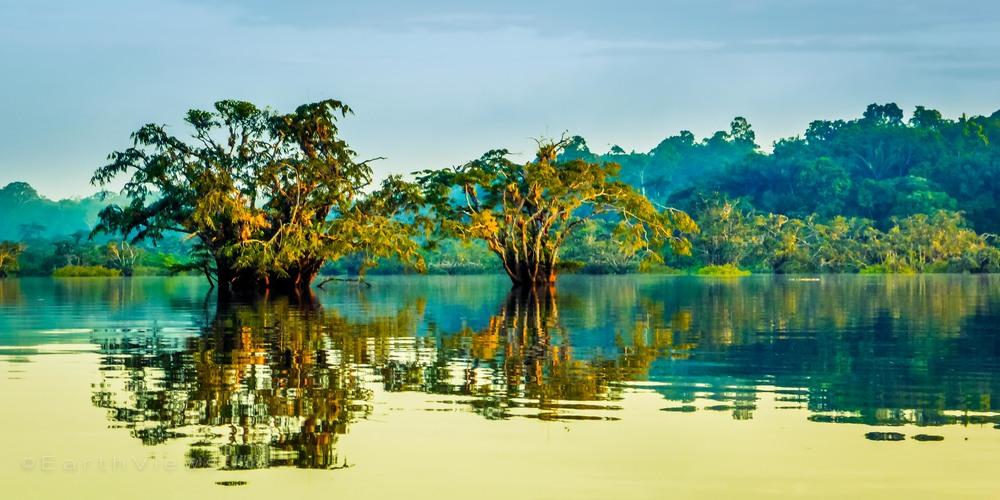Amazon morning