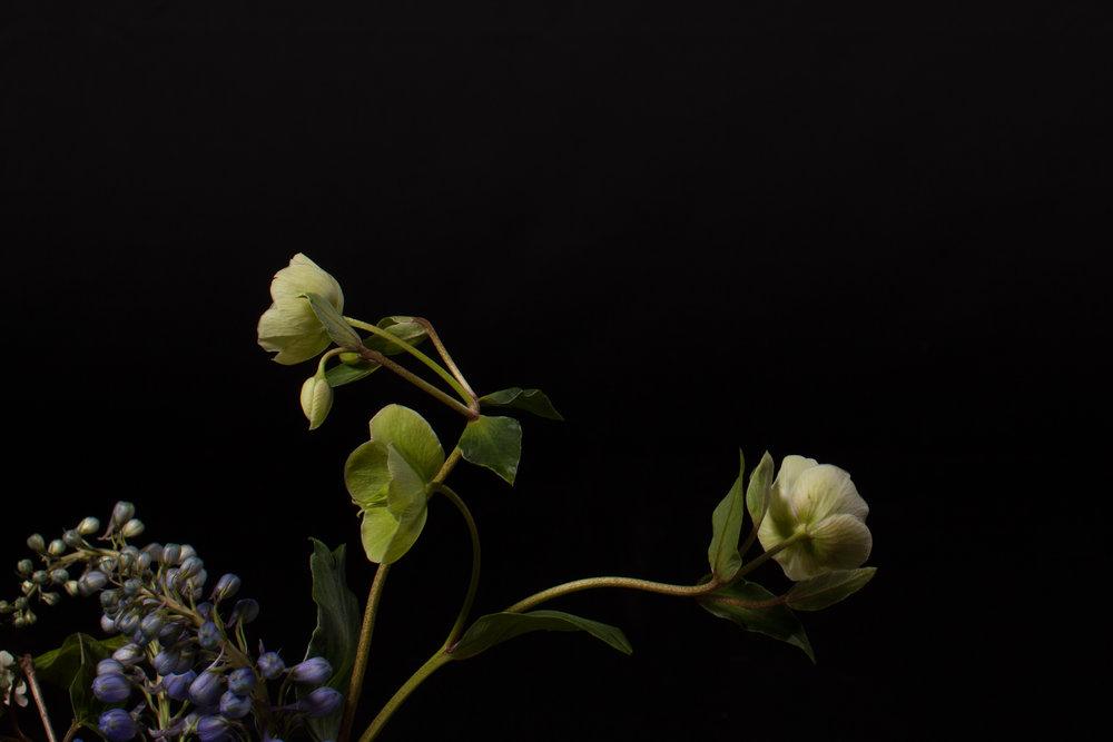 Dark_Floral-7283.jpg
