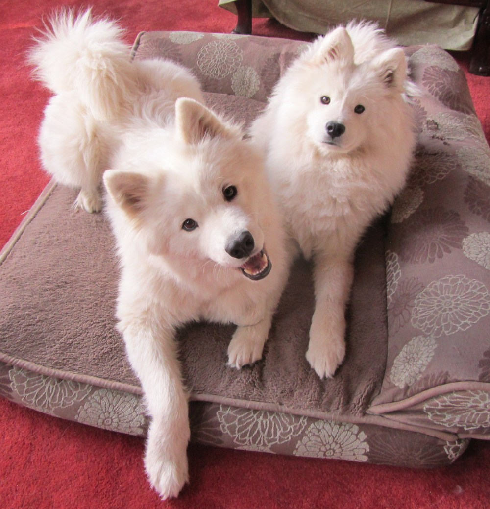 kili and kuma oct 2014.JPG