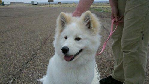 New puppy.jpg