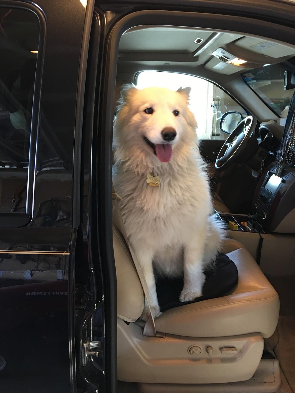 Blanca in car.JPG