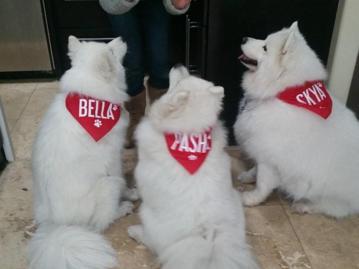 Bella8.jpg