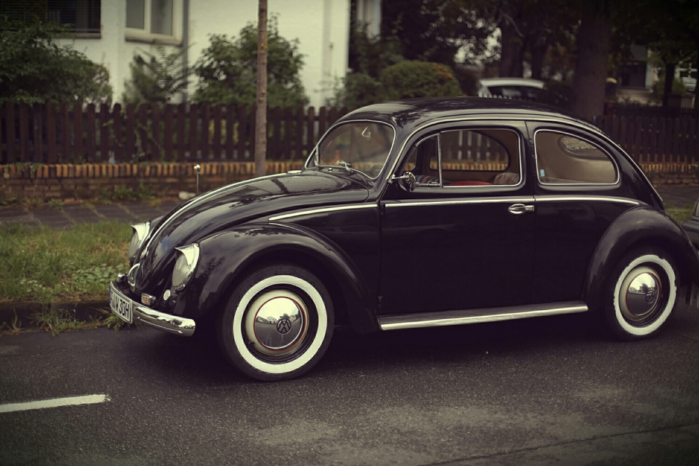 old black beetle