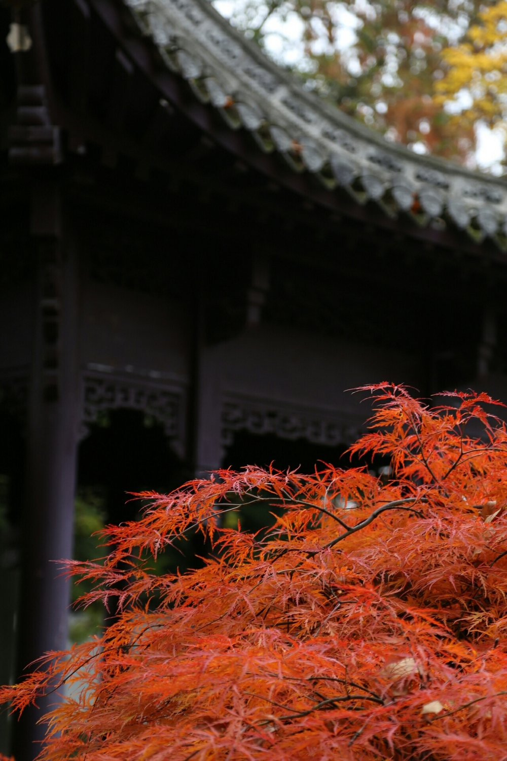 Autumn in the Chinese garden