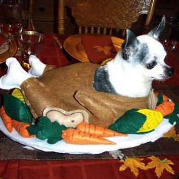 Give thanks and spare the turkey, they're puppies too. 🦃❤🦃